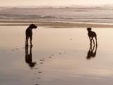 surf beach 12-26