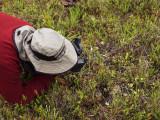 Ron Parsons photographing Cleistes bifaria
