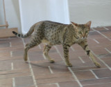 Wilda in June '09 - 1,5 years old