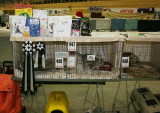 S*Junglespots cattery was Best In Show both days in Cat. III!! :)