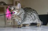 Wildcat!