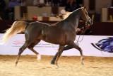 Arabian Horses (13).jpg