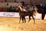 Arabian Horses (14).jpg