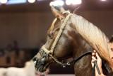 Arabian Horses (15).jpg