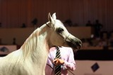 Arabian Horses (16).jpg
