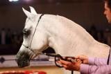 Arabian Horses (17).jpg