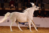 Arabian Horses (4).jpg
