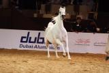 Arabian Horses (5).jpg