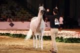 Arabian Horses (7).jpg