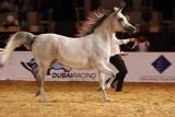 Arabian Horses.jpg