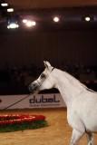 Arabian Horses (21).jpg