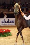 Arabian Horses (22).jpg