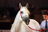 Arabian Horses (24).jpg