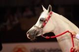Arabian Horses (27).jpg