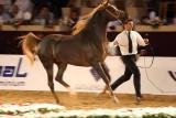 Arabian Horses (28).jpg