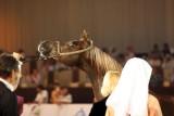 Arabian Horses (30).jpg