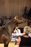 Arabian Horses (31).jpg