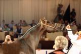Arabian Horses (33).jpg