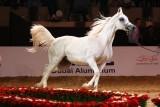 Arabian Horses (35).jpg