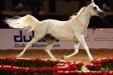 Arabian Horses (36).jpg