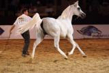 Arabian Horses (37).jpg