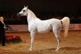 Arabian Horses (41).jpg