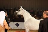 Arabian Horses (42).jpg