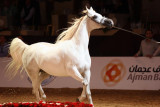 Arabian Horses (45).jpg