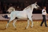 Arabian Horses (48).jpg