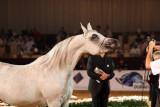 Arabian Horses (52).jpg
