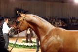 Arabian Horses (61).jpg