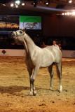 Arabian Horses (63).jpg