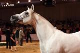 Arabian Horses (64).jpg