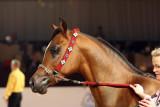 Arabian Horses (66).jpg