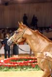 Arabian Horses (68).jpg