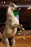 Arabian Horses (69).jpg