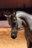Arabian Horses (72).jpg