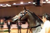 Arabian Horses (75).jpg