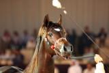 Arabian Horses (76).jpg