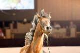 Arabian Horses (77).jpg