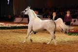 Arabian Horses (78).jpg