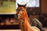 Arabian Horses (79).jpg