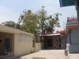 03-sthala vruksham and parama padha vAsal.jpg