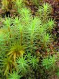 Oct 08 cairngorm moss