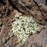toubkal summit plant