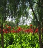 Oasiria gardens