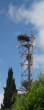 Storks nests