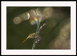 I can see a rainbow.....and a dragonfly
