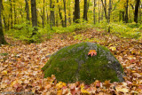 Mossy Rock and Leaf
