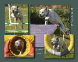 Magee 8x Mason montage copy.jpg